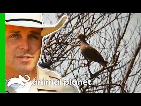 Illegal Dove Shootings Near A Residential Neighbourhood Cause Concern | Lone Star Law petworldglobal.com