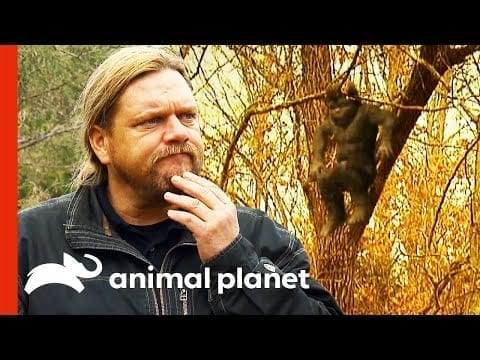 Incredible Baby Sasquatch Sighting | Finding Bigfoot petworldglobal.com