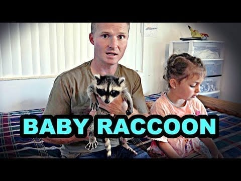 Mink Man With a Baby Raccoon!?!?!? petworldglobal.com