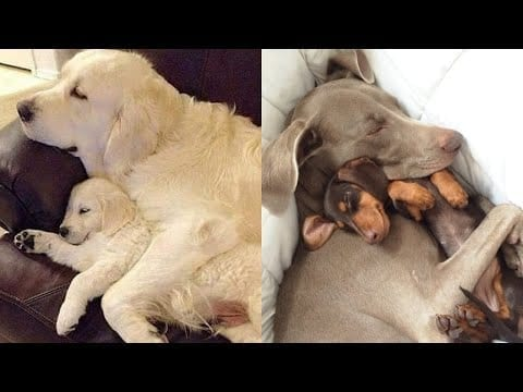 Mother Dog and Cute Puppies - beautiful, happy and meaningful moment of Dog family ! petworldglobal.com