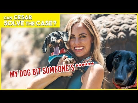 MY WIENER DOG BIT SOMEONE'S WEENIE | Cesar Solves the Case | Limited Series petworldglobal.com