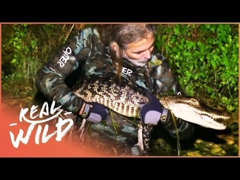 The Abandoned Mine Filled With Alligators (Wildlife Documentary)   Savage Wild   Real Wild petworldglobal.com