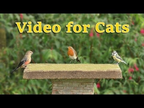 Videos for Cats to Watch Birds Extravaganza ⭐ 8 HOURS of Cat TV ⭐ NEW petworldglobal.com
