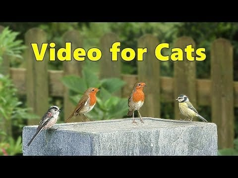 Videos for Cats to Watch - Garden Birds Delight ⭐ NEW petworldglobal.com