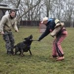 CZECH GERMAN SHEPHERD DARK SABLE FEMALE - POHRANICNI STRAZE
