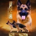 Wacron Del Rione Antico Puppies in California NOW