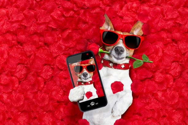 Love is in the Air - How to Advertise Stud Dog Successfully