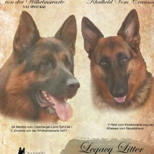 Outstanding VA GSD Puppies For Sale