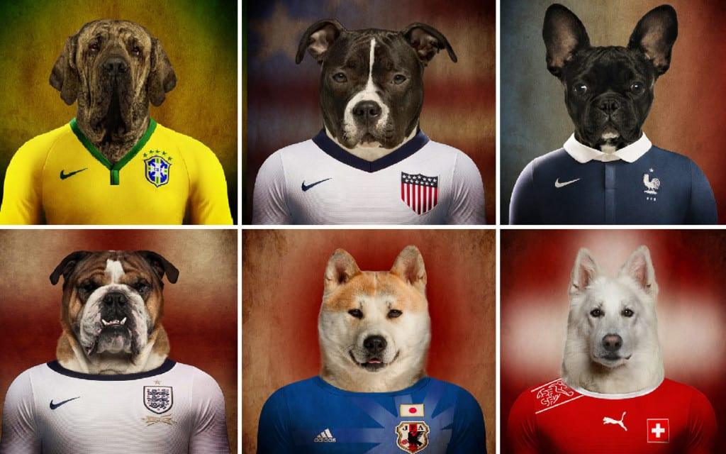 Sports and Dogs - How to Advertise Stud Dog Successfully