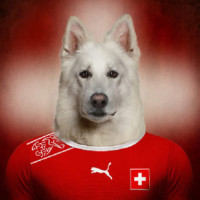 Profile picture of Sport and Dogs